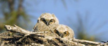 Baby Birds & Rehab